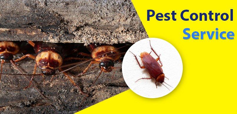 pest-control-toronto