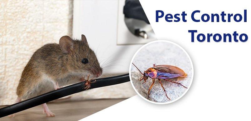 Pest-Control_toronto