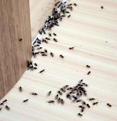 Pest-control-eastend-toronto